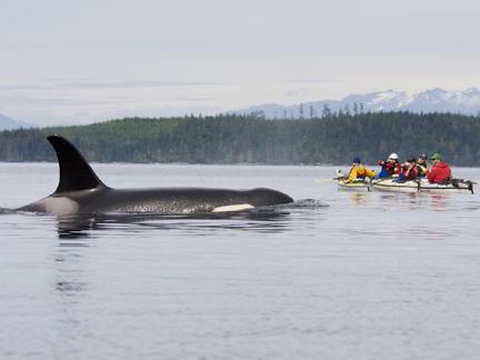 Orca Kayak Tours Vancouver