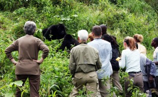 Gorilla Tracking C Journeys Discovering Africa