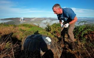 CDC tagging tortoise