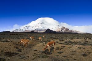 Chimborazo_Reserva-Fuanistica-Chimborazo_33