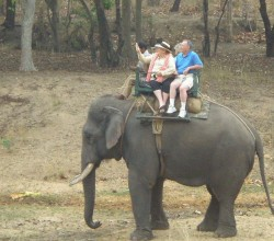 Elephant ride created by VAST partner, Greaves Tours