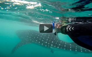 Whale-Shark-5---Mark-Crawford