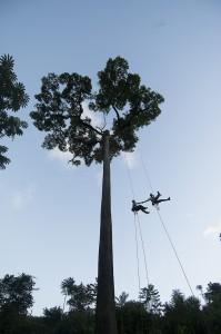 Amazon Treeclimbing