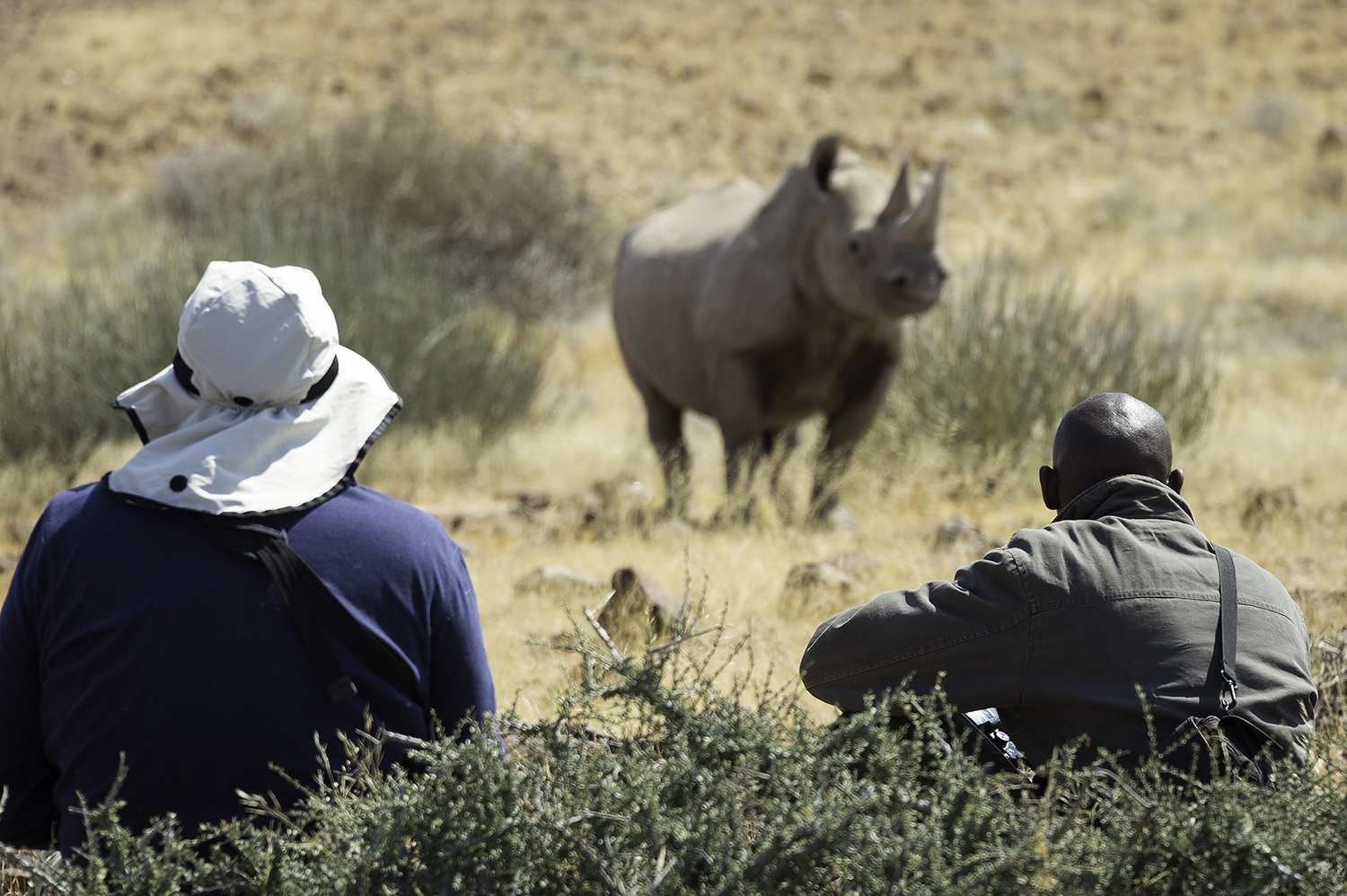 Desert Rhino Camp Secures a Future for Critically-Endangered