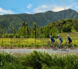 Upscape Bike & Wine