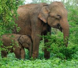 WAP-Elephants1015069