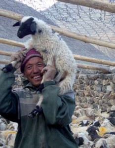 SLC in partnership with locals protecting livestock in exchange for their protecting snow leopards. Photo: SLC