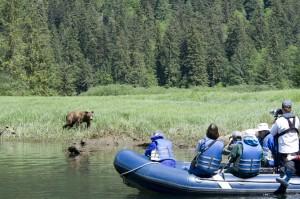 Grizzly-bear-zodiac-photo-GregShea