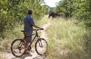 Mountain biking on elephant paths in remote Hwange National Park near Jozibanini Camp