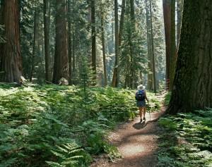 USA_california_Sequoia_NP_hike