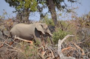 Observing elephants