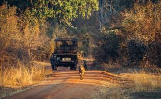 Bryan Geli 2014 Safari-12