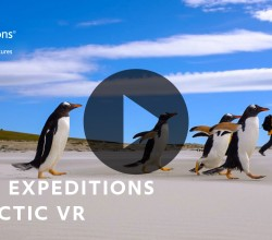 Penguins and tourists-730Wx330H-PlayButton-Updated