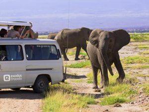 """Amazing morning light in savannah on Safari with elephant saying halo, Amboseli NP, Kenya, East Africa."""