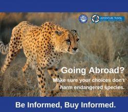 going-abroad-cheetah-fb-atta