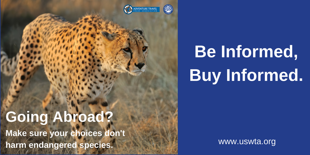 going-abroad-cheetah-twitter-atta
