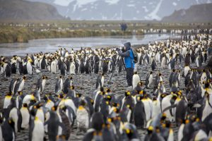 photographer-with-king-penguins-on-south-georgia-michael-baynes-aurora-expeditions