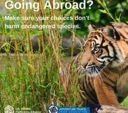 going-abroad-tiger-twitter-atta