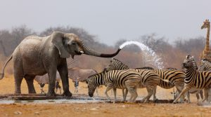 Shower time in Etosha