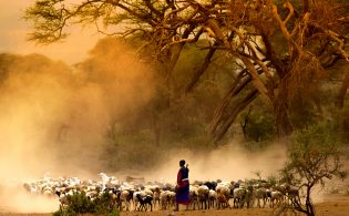 maasai-shepherd-leading-flock-of-goats-kenya-east-africa_154715039