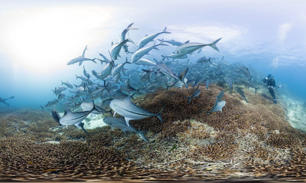 Trevally at Lady Elliot Island - Photo By The Ocean Agency-XLCatlin Seaview Survey-Christophe Bailhache