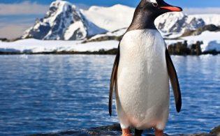 antarctica_penguin_solo_shutterstock