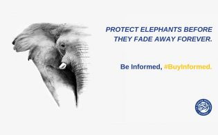 world-elephant-day-graphic-2-twitter
