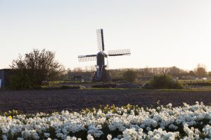 butterfield-holland-walking-01